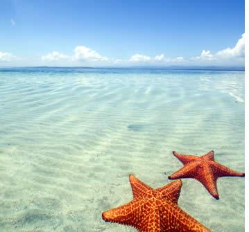 Starfish Beach a Boca del Drago, Bocas del Toro, Panama